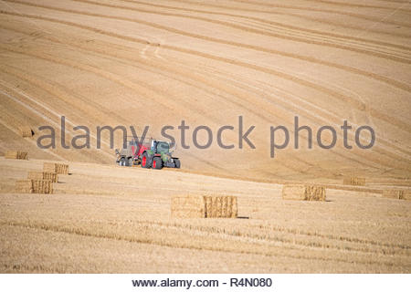 Tractor baler making straw bales in field after summer wheat harvest on farm - Stock Image