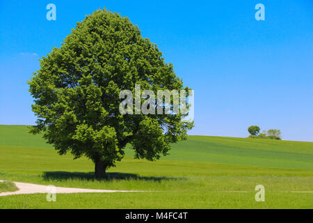 lonely tree - Stock Image