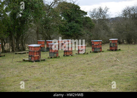 Beehives prepared for winter in a field near the north Oxfordshire village of Hook Norton - Stock Image