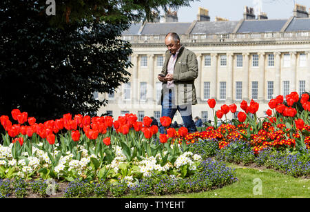 Bath, Somerset, UK, 29th March, 2019. A man enjoying the warm sunshine is pictured walking past colourful Tulips in Royal Victoria Park. Credit:  Lynchpics/Alamy Live News - Stock Image