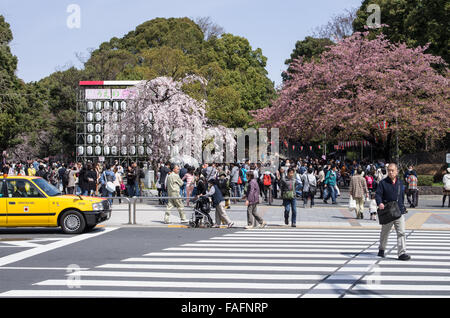 Entrance to Ueno Park with cherry blossoms already partially in full bloom, Tokyo, Japan - Stock Image