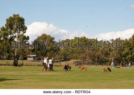 People walking their dogs in Elsternwick Park, a large parkland reserve in the SE suburbs of Melbourne, Australia - Stock Image