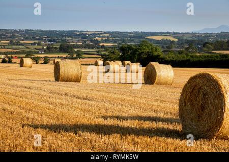 Cut barley Field at Scrabo, North down, Northern Ireland - Stock Image