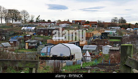 Allotments West Avenue Amble   Amble is a small town on the north east coast of Northumberland in North East England. Cw 6650 - Stock Image