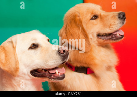 Trained dogs for Assisted therapy - Stock Image