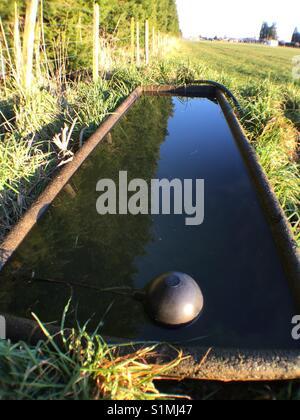 Water trough in field - Stock Image