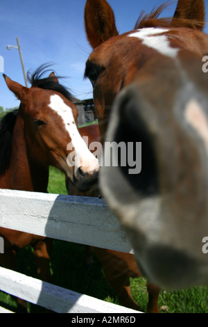 A curious horse gives us a curious view. - Stock Image
