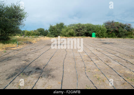 Irrigation tubing in Ghanzi, Botswana - Stock Image