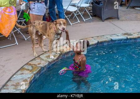 African-American girl, playing with mix-breed dog, girl, child, playing in swimming pool, fresh water swimming pool, Castro Valley, California - Stock Image