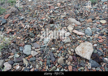 A Tuva toad head agama is hardly visible between the pebbles along the Khyargas Nuur, A salt water lake in Khyargas district, Mongolia. - Stock Image