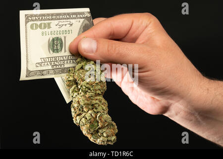 Man presenting closeup of green weed bud and dollar bill as drug dealer concept isolated on black background - Stock Image