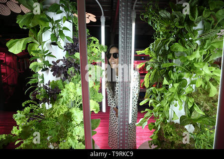 A woman views a tower garden featured in the Ikea and Tom Dixon 'Gardening will save the World' garden at the RHS Chelsea Flower Show at the Royal Hospital Chelsea, London. - Stock Image