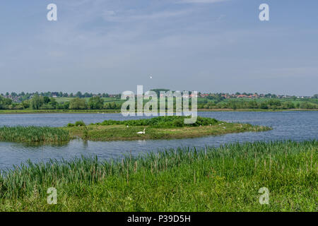 A view over Summer Leys, a series of former gravel pits, now a nature reserve owned by the local Wildlife Trust; Northamptonshire, UK - Stock Image