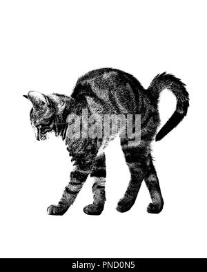 1970s COMMON DOMESTIC TABBY CAT Felis catus ARCHING BACK IN PROFILE HIGH CONTRAST POSTERIZATION GRAPHIC EFFECT - c11481 HAR001 HARS POSTERIZATION - Stock Image