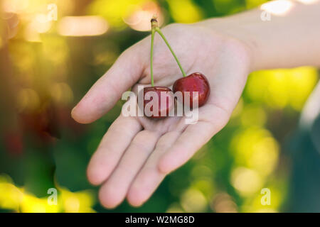 Two ripe red cherries on the girl's hand - Stock Image