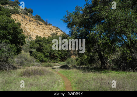 Narrow mud track winds into the green woods of a southern California nature preserve. - Stock Image