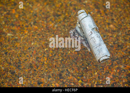 Birch bark in water - Stock Image