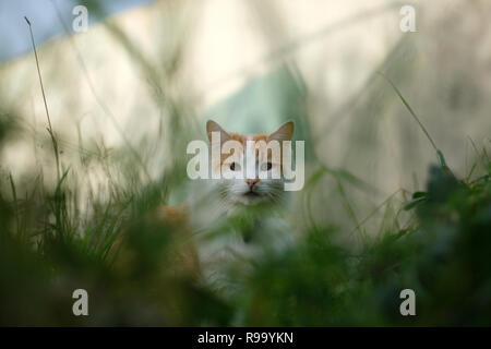 A cat sitting grass looking directly into the camera - Stock Image