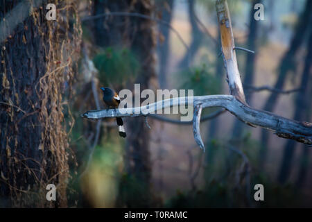 Long tail bird on a tree branch - Stock Image