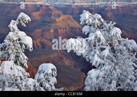 Winter view at Mather Point area on South Rim of Grand Canyon National Park, Arizona, USA - Stock Image