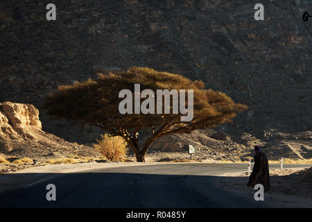 Road in South Sinai. Egypt - Stock Image