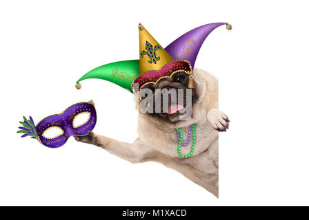 Mardi gras pug dog with carnival jester hat, venetian mask, harlequin jester hat and beads necklaces, isolated on - Stock Image