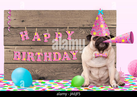 cute pug puppy dog with pink party hat and horn and wooden sign with text happy birthday, on light pink background - Stock Image