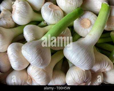 Spring onions (also known as scallions, green onions, or salad onions) for sale on a market stall in Tenby, Wales. - Stock Image