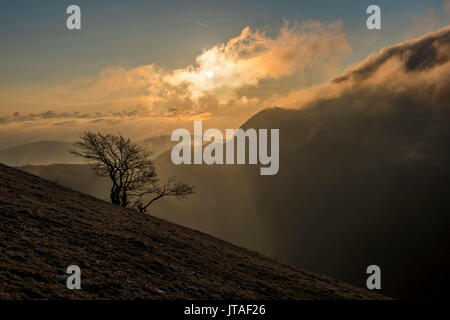 Sunrise on a lonely tree on mountain Motette, Apennines, Umbria, Italy, Europe - Stock Image