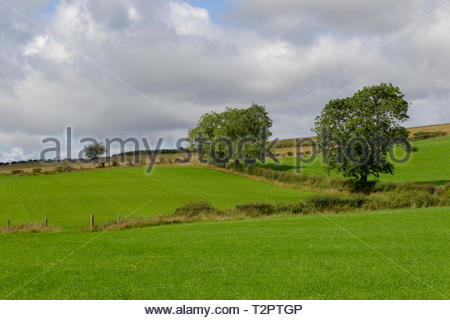 Fields with hedgerows and trees - Stock Image