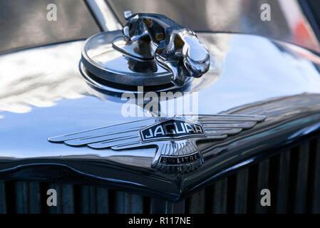 Close-up of a leaping Jaguar radiator cap mascot and Bonnett badge, on a 1950 Jaguar Mark V Saloon, on display at the Regents Street Motor Show 2018 - Stock Image