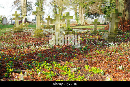 A view of an English country churchyard with headstones, Snowdrops, and Winter Aconites at Shelton, Norfolk, England, United Kingdom, Europe. - Stock Image