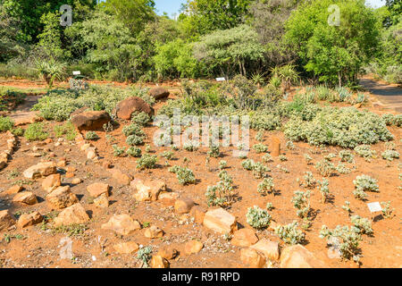 National Botanical garden in Pretoria, South Africa. It contains plants from all over Southern Africa. - Stock Image