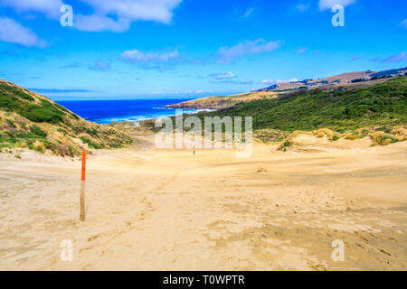 Lone figure in the sand dunes at Sandfly Bay, Otago Peninsular, South Island, New Zealand - Stock Image