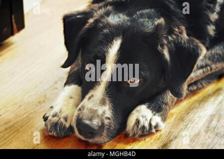 a day in a dogs life - Stock Image