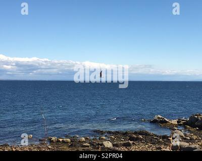 A seagull flies over the blue sea. Taken from Arran, Scotland. - Stock Image