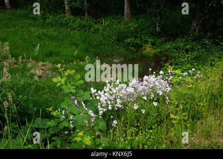 Wild flowers in Spring British Columbia Canada - Stock Image