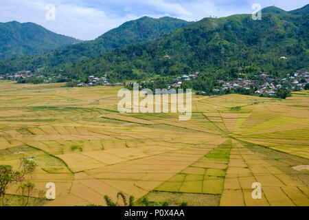 Rice fields divided like a spider's web ('lingko') in Cancar Village near Ruteng, Manggarai Regency, island of Flores (East Nussa Tenggara), Indonesia - Stock Image