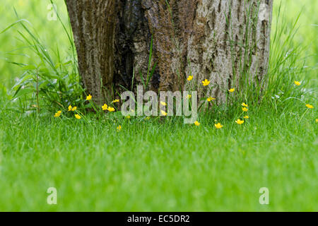meadow with tree and yellow petals - Stock Image