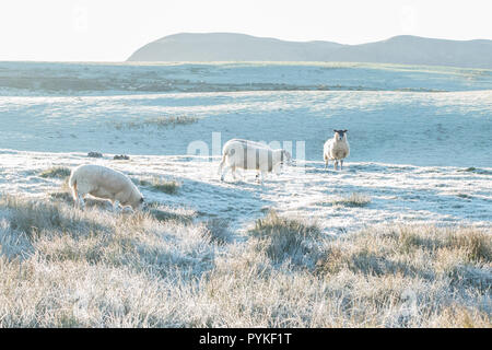 Stirlingshire, Scotland, UK. 29th Oct, 2018. uk weather - a misty and frosty start to the day in Stirlingshire Credit: Kay Roxby/Alamy Live News - Stock Image