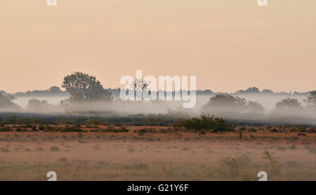 Alvar limestone moor in the early morning light at Isle if Oeland, province Kalmar, Sweden - Stock Image