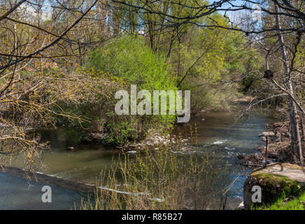 Riparian forest next to the river Manzanares, in El Pardo, Madrid, Spain - Stock Image