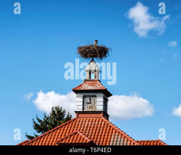 Stork,Ciconia ciconia, sitting in nest on clock turret of house in Milmersdorf,Brandenburg,Germany - Stock Image