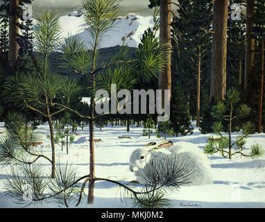Rabbit in Snow - Stock Image