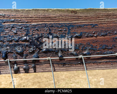 Close up of bitumen coated fence panel with the hot sun melting the material and it has started to run down the wood - Stock Image