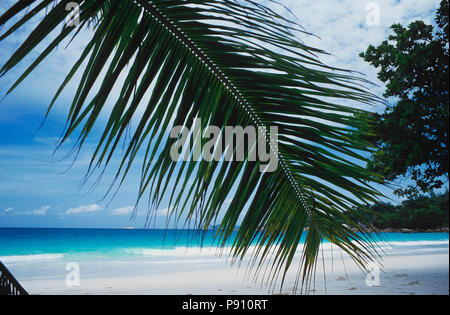 BEACH WITH PALM TREE AND ISLAND VIEW, SEYCHELLES, ISLAND, EAST AFRICA. JUNE 2009. The beautiful islands of the Seychelles in the Indian Ocean offer pe - Stock Image