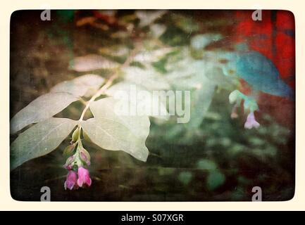Flower bud and leaves with grunge texture - Stock Image