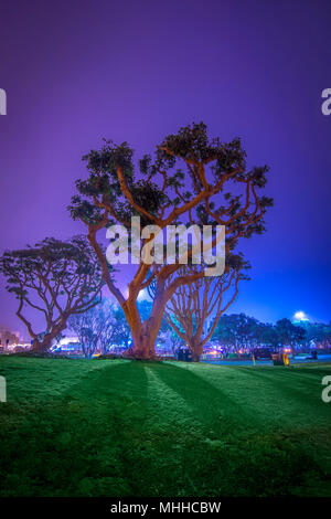 Colorful Lights at Night On Trees In Park, San Diego California - Stock Image