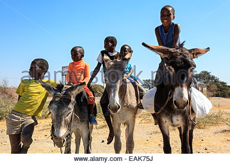 Bushman children, children from the Khoisan people with donkeys, Kalahari, Botswana - Stock Image