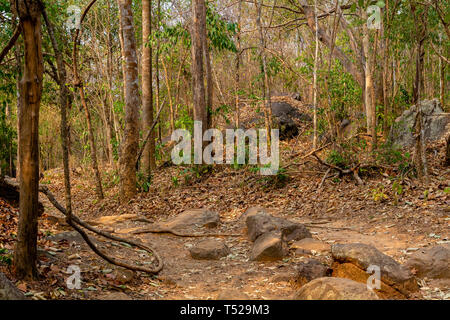 Very dry Forest near Chayaphum, Thailand, in March, drought in dry dipterocarp forest and mixed forest, northeast Thailand - Stock Image